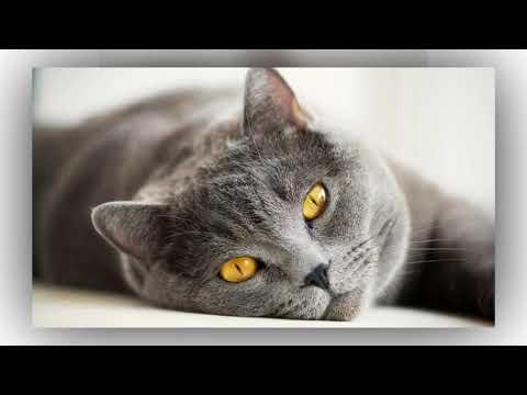 Как люди отмечают Всемирный день кошек в разных странах мира