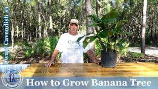 How To Grow Banana Tree #1