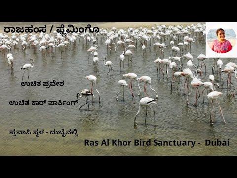 ದುಬೈನ ಪ್ರವಾಸಿ ಸ್ಥಳ – ಹೌಸ್ ಆಫ್ ಫ್ಲೆಮಿಂಗೋಸ್ l Ras Al Khor Flamingo in Dubai l entry free tourist place