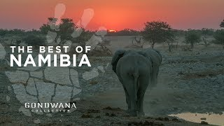 The Best of Namibia - A Bird