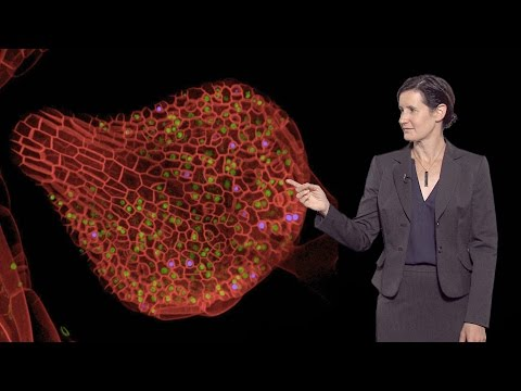 Dominique Bergmann (Stanford U / HHMI) 2: Stomata as a model for stem cells
