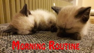 MORNING Routine BABY Cats!