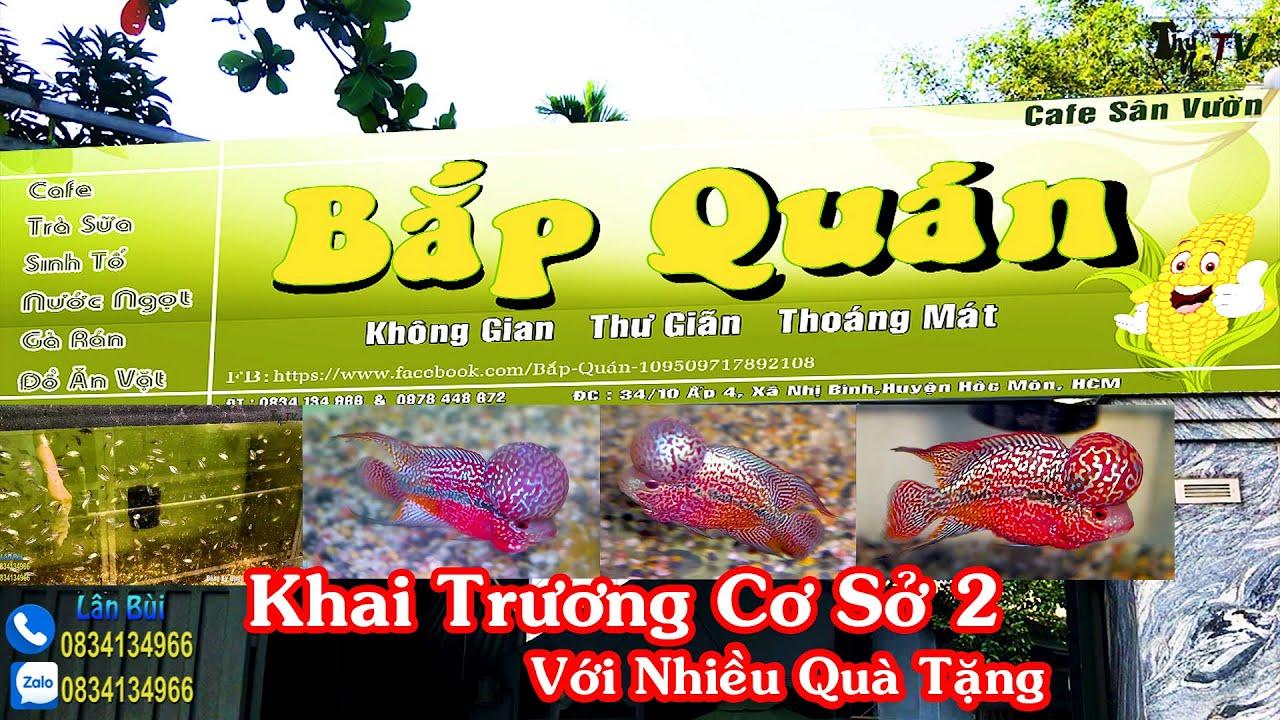Cơ Sở Cá La Hán Lân Bùi : Khai Trương Cơ Sở 2 Với Nhiều Quà Tặng Ý Nghĩa