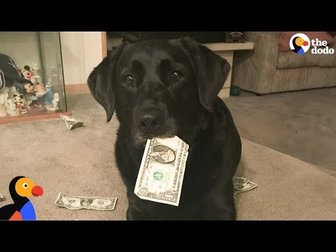 SMART Dog Collects Money To Pay For Treats | The Dodo