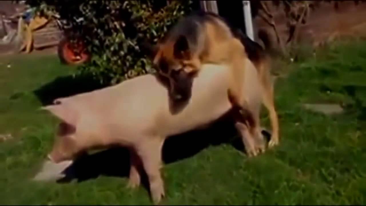 Chubby girl upskirt Milf porn