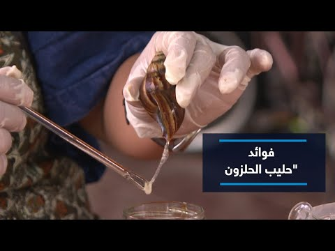 فوائد -حليب الحلزون-.. كيف تحول إلى تجارة أغلى من الذهب  - نشر قبل 11 ساعة