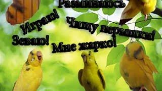 Как понять попугая? Язык тела волнистого попугая! Как понять попугая по его поведению! Часть 2