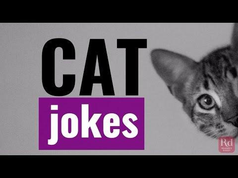 Cat Jokes