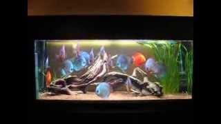16 adulte Stendker Diskus (17 cm+) im 450 Liter Aquarium oder: Das große Fressen :-)