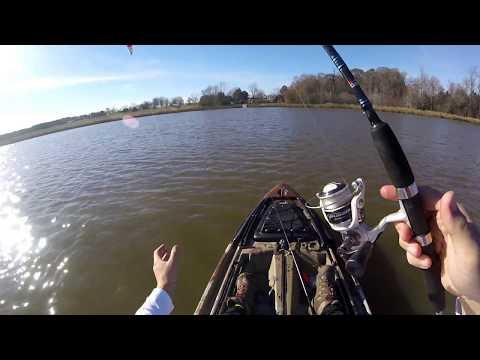 Kayak Fishing W/ Live Shiners (Bass LOVE Them!)