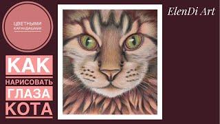 Как нарисовать кота цветными карандашами поэтапно Как нарисовать глаза кошки How to draw a cat