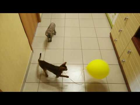 Кот и огурец - Видео Dailymotion