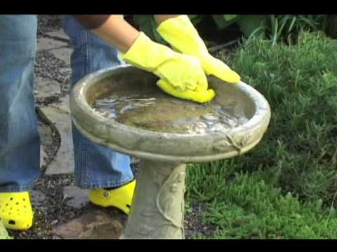 How To Clean And Maintain Bird Baths