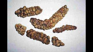 Кофе из фекалий – как готовят самый дорогой кофе в мире – Особенности национальной работы, Непал