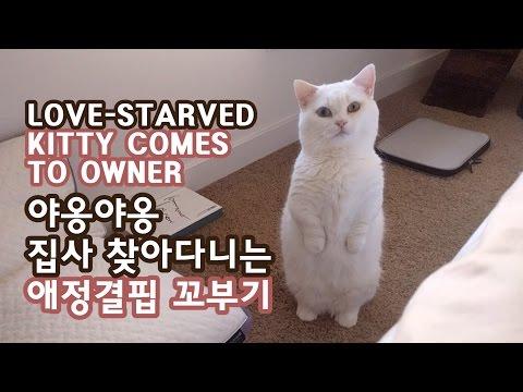 야옹야옹 집사 따라다니는 애정결핍 고양이 꼬부기 LOVE-STARVED CAT FOLLOWS OWNER