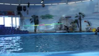 видео дельфинарий в минске