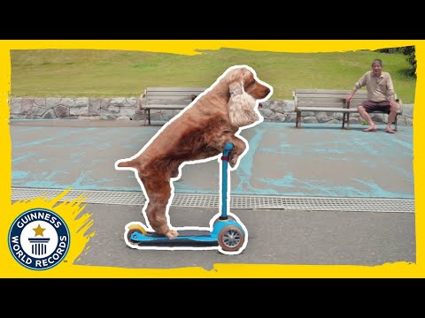 He was a skater dog! - Guinness World Records