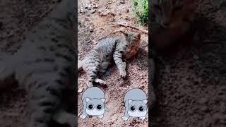 Funny cat tictok