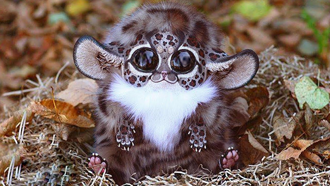 Asla Karşılaşmak İstemeyeceğiniz 7 En Tatlı 7 Hayvan - Bunlardan Birini Görürseniz HEMEN KAÇIN!