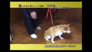 噛み癖のある犬のしつけ 犬はきっちりしつけをすれば治ります。 ドッグトレーナー 山本卓 大阪