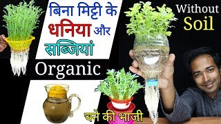 How to grow coriander or vegetables at home without soil | Grow coriander or Dhaniya in water