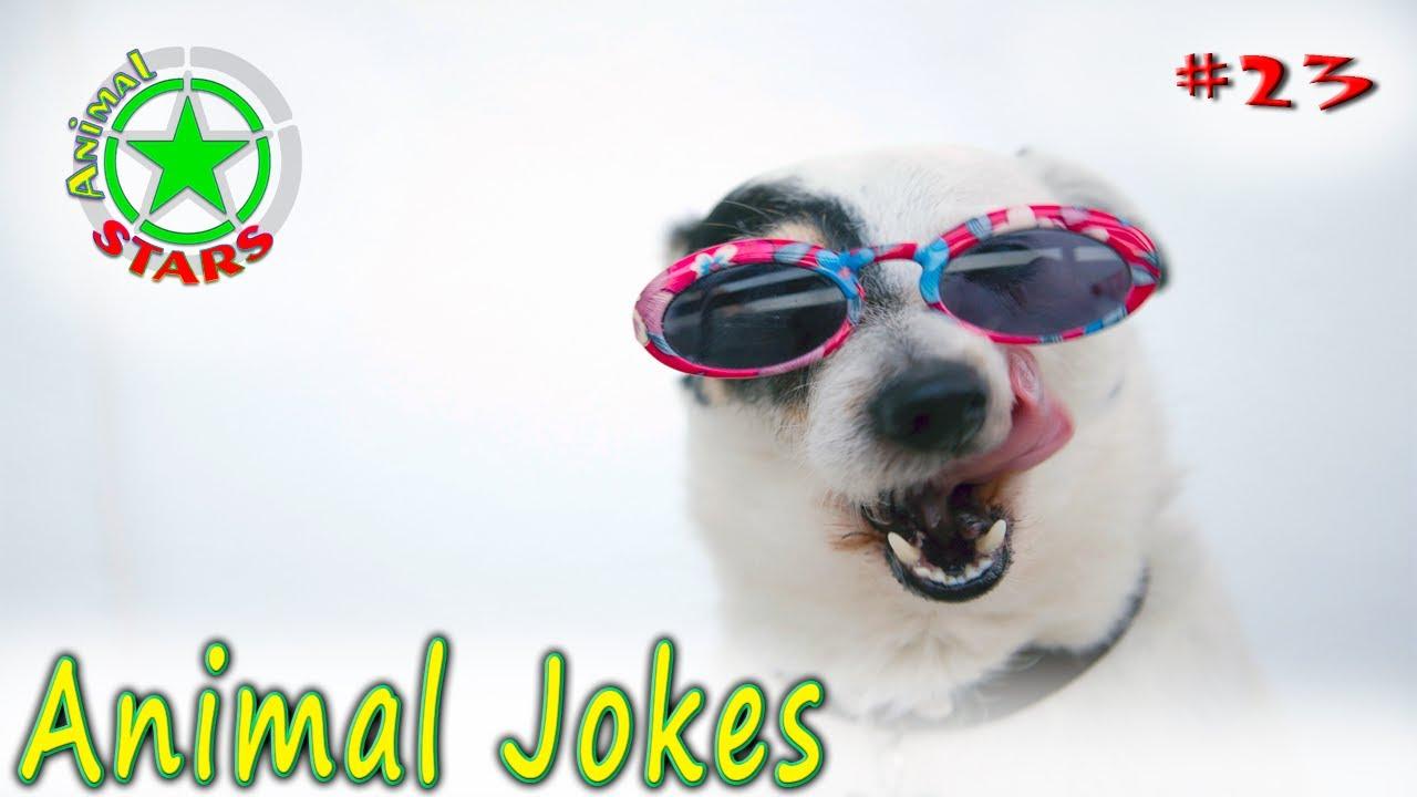 Animal Jokes Funny Dogs Cute Cats Amazing Pets Funny Jokes 2020 #23