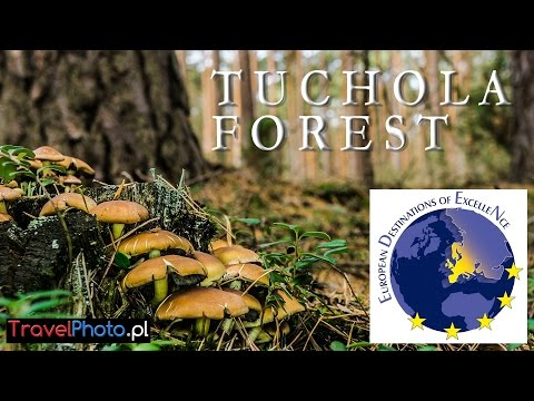 Tuchola Forest (Poland) - EUROPEAN DESTINATION OF EXCELLENCE (EDEN)