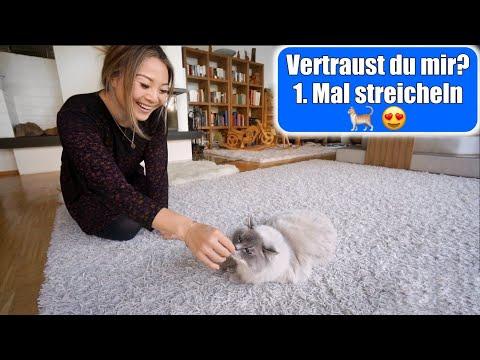 Das 1. Mal Katze streicheln 😍 Namen für die Katzen? Die ersten Stunden Eingewöhnung   Mamiseelen