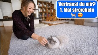 Das 1. Mal Katze streicheln 😍 Namen für die Katzen? Die ersten Stunden Eingewöhnung | Mamiseelen