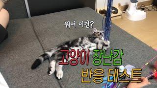고양이 장난감 반응 테스트 Cat toy reactio…