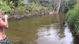 Creek Fishing FNQ