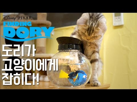 Dori has been caught by the cats! [SURI&NOEL]