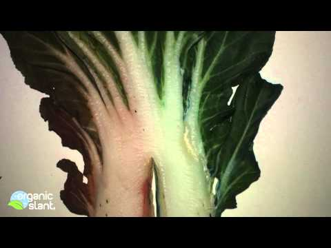 Systemic pesticide and plant become one 4-17-2013 | Organic Slant