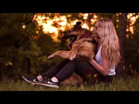 Dog tricks by German Shepherd Britney  6 years