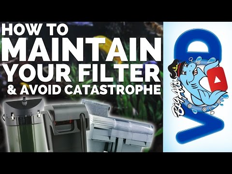 How To Maintain Your Filter (and Avoid Catastrophe) | BigAlsPets.com