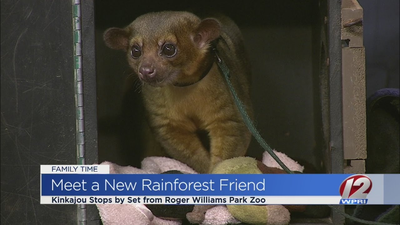 Roger Williams Park Zoo prepares for new rainforest exhibit - YouTube