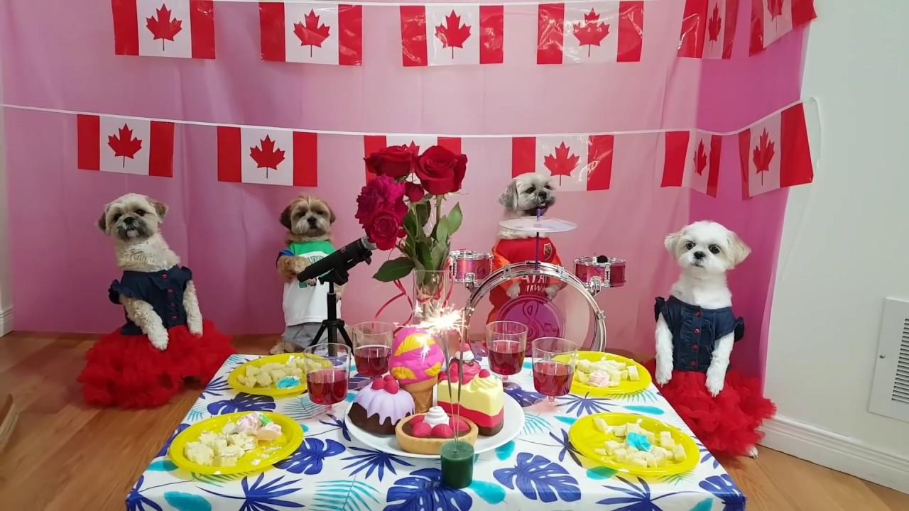Bốn bé chó tuyệt vời thông minh ca hát nhảy đầm Happy Canada's day 2020