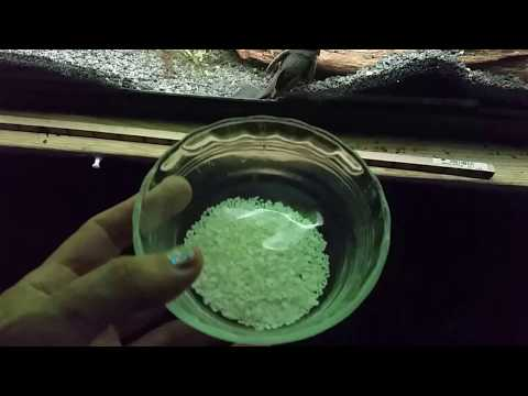 Crushed Eggshell For Added Calcium And Magnesium In My Tank