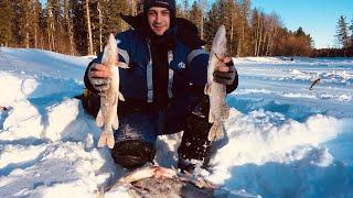 Оставил жерлицы без присмотра. Активная зимняя рыбалка 2020 на жерлицы. Подкова.
