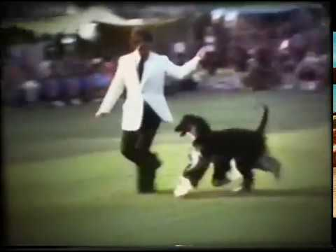 1973 AHCA National Regional Specialty 1 - Veterans and Best of Breed