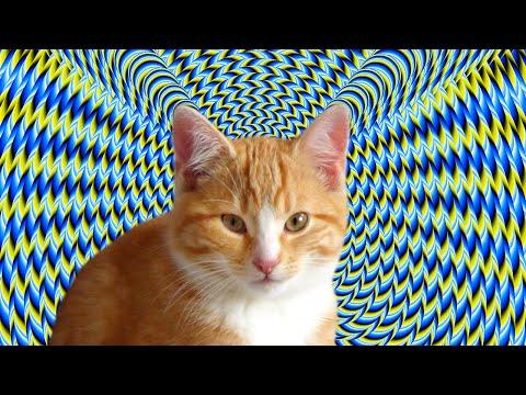 Cute kitten vs optical illusion, PixelFlight.