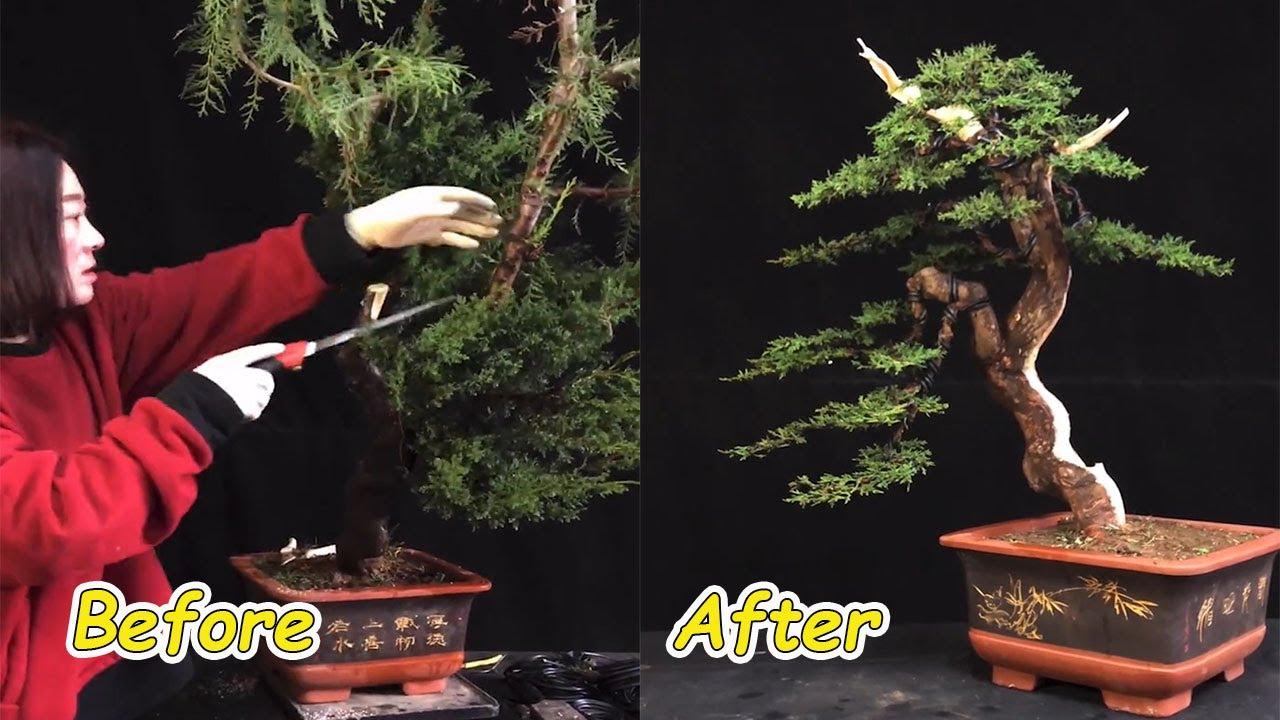 How to bend a bonsai - great bonsai bending skills #60