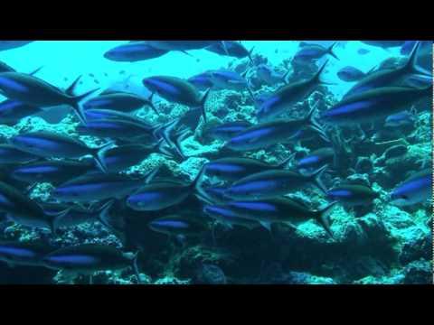 Redlands Palau 2006 Trip