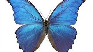 Jemme - Butterfly (DJ Elavena Mix)