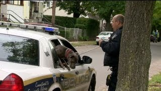 Pit bull killed dog near New Haven HS