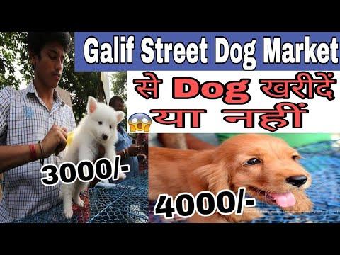 Kolkata Galif Street Dogs Market / Dogs price list in India/Lebrador, pittbull price in India