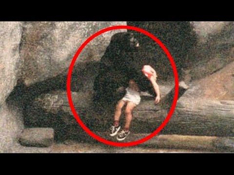 İnsanların Hayatını Kurtaran 5 İnanılmaz Hayvan