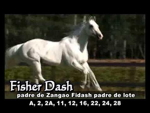 RDA - NOVEDADES 2012 -  Fisher Dash
