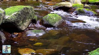 4K UHD Relaxing River - Beautiful Nature Video & Relaxing River Sounds for Sleep, Study & Meditation