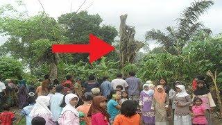 Dikira Cuma Pohon Biasa, Tiba² Warga Terkejut Saat Lihat Ada Keanehan! Mengejutkan!